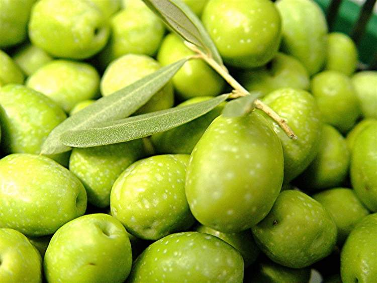 Les olives vertes de table