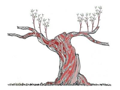Les techniques de la taille de l 39 olivier - Periode de taille d un olivier ...